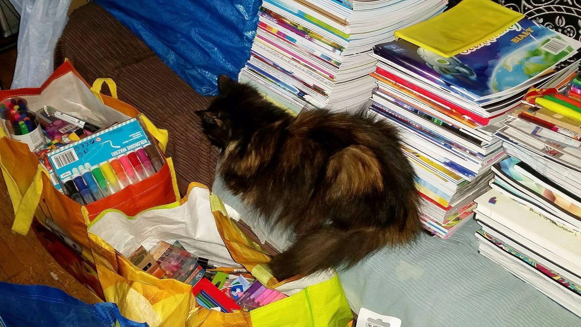 Kot w mieszkaniu Natalii Gebert po zbiórce artykułów szkolnych w 2017 r. Zdjęcie: Natalia Gebert