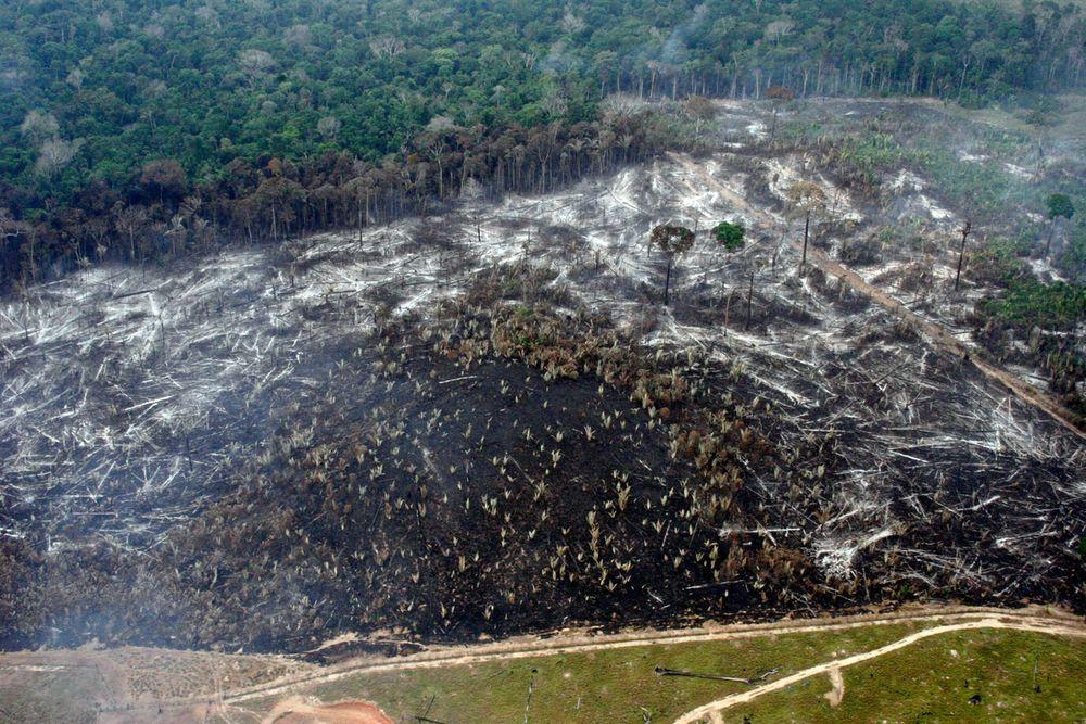 Deforestacja w Bom Futuro, Brazylia