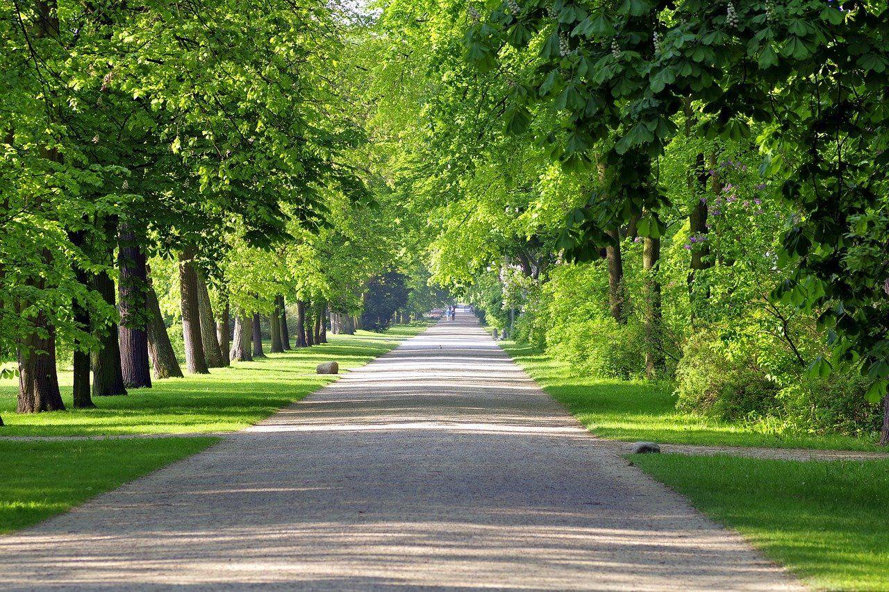 Aleja w parku, obsadzona gęstymi zielonymi drzewami