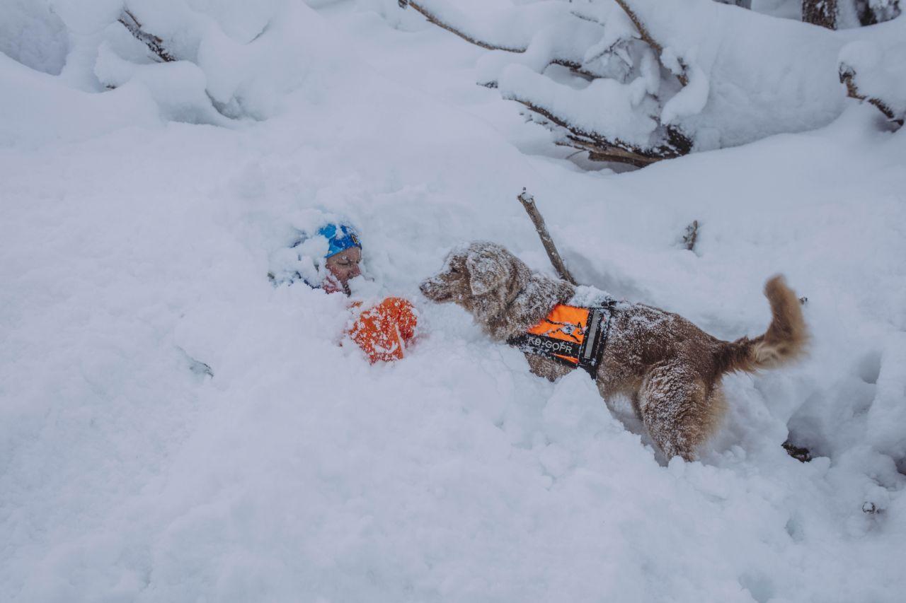 Psi ratownik w akcji
