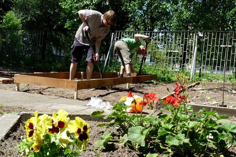 Projekt Ogrodu Warzywnego